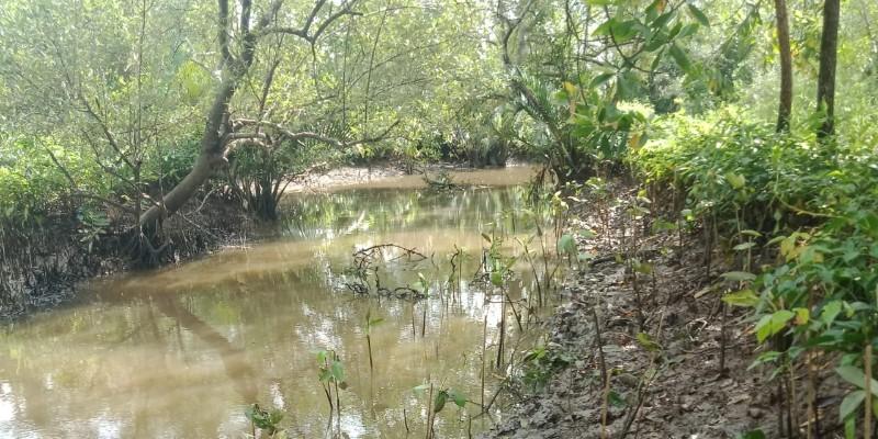 Ecolify.org Projek Lokasi Kampung Laut, Cilacap