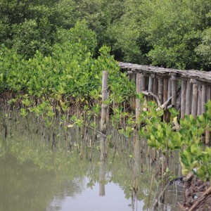 berlokasi disebelah jembatan yang dulunya digunakan untuk akses menuju lokasi penanaman