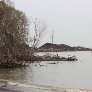 pesisir trimulyo rusak akibat adanya abrasi yang berkelanjutan menjadikan mangrove yang sudah besar maupun yang baru ditanam mengalami kematian