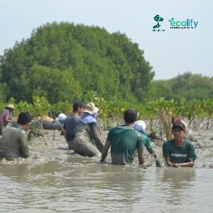 peserta dari berbagai komunitas anak muda yang tergabung dalam penanaman yang dilakukan oleh LindungiHutan turut andil dalam membuat benteng alami pencegah abrasi yang ada di bedono, demak