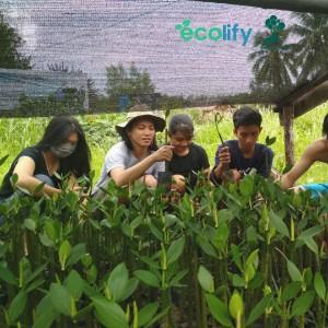 Ecolify.org Project Location pembibitan ini dilakukan sebagai bentuk pencegahan untuk kawasan pesisir mempawah